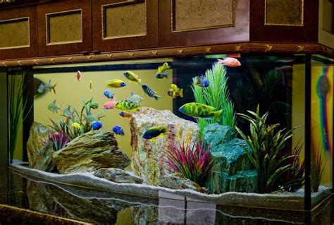 Kitchen Cabinet Colors Ideas Beautiful Aquarium Room Divider The Interior Design
