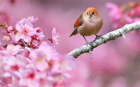wallpaper flower and birds spring flowers and birds wallpaper wallpapersafari