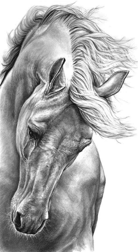 image gallery horse drawings to colour horse drawings in pencil step by step archives drawings