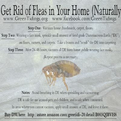 how to rid fleas in house green tidings how to get rid of fleas in your home naturally