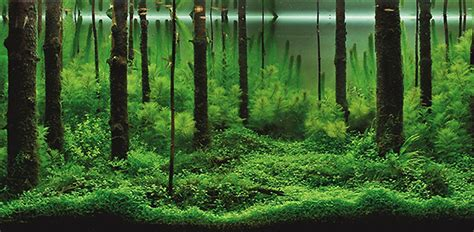 mind blowing aquariums   underwater forests