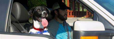 best cars for dogs find the petmobile at akins ford akins ford akins ford