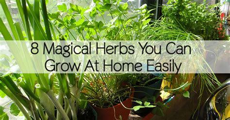 magical herbs   grow  home easily healthy