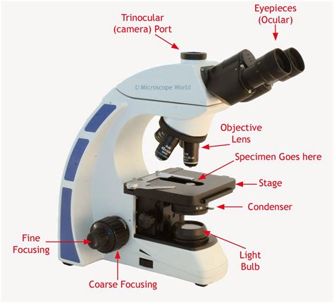 what is a compound light microscope microscope how does a light microscope work