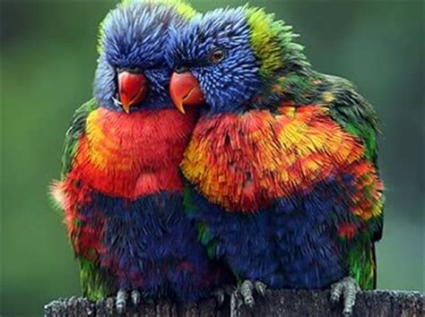 colorful animals 22 colorful animals that brings vibrancy to nature wow