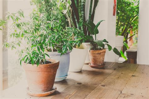 great house plants eight great house plants to clear the air and make your home beautiful