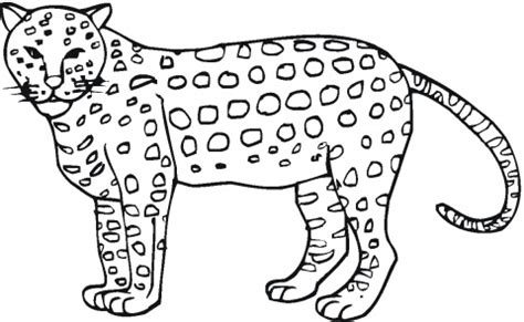 Running Cheetah Outline by Cheetah Outline And Coloring Pictures