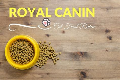 royal canin food reviews royal canin cat food review tinpaw