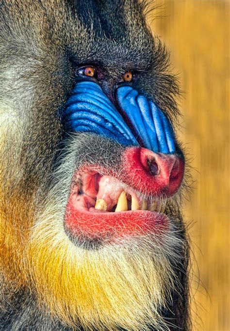 beautiful examples  animals photography