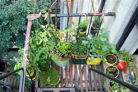 Urban roof vegetable garden   Home Conceptor