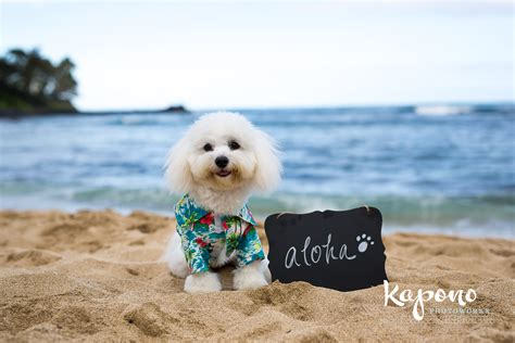 oahu puppies kapono photoworks 187 hawaii food photographypuppy portraits hawaii photography