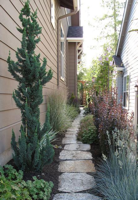 narrow trees for narrow gardens garden seattle by le