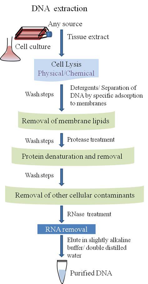 De En A Dna Total Cosmetic Solution dna的抽提和纯化
