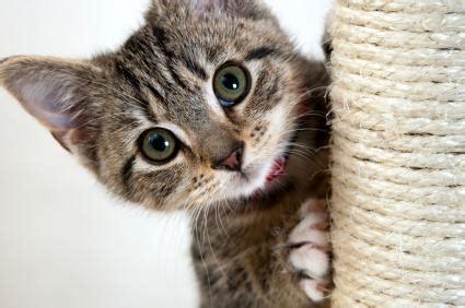 theme names for litter of kittens kitten names lovetoknow