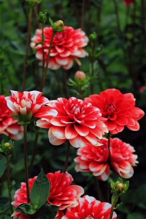 2214 Best Everything Plants And Flowers Images On Pinterest 719 Best Images About Gardens Garden Things And Flowers