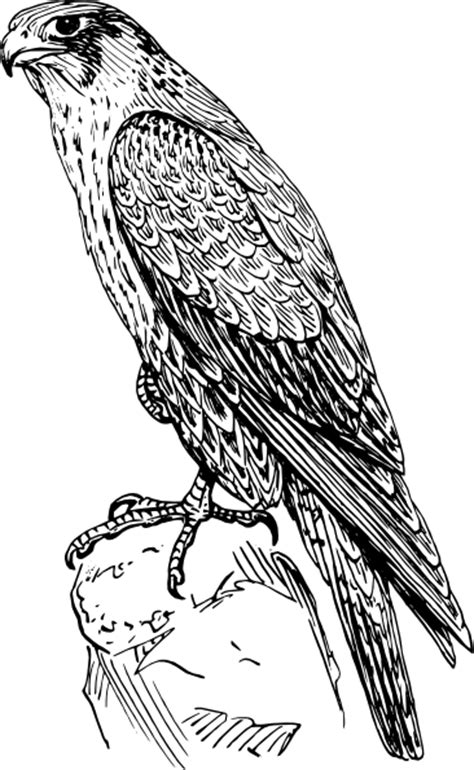 falcon coloring pages www imgkid com the image kid has it