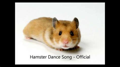 Youtube Music Hamster Dance | hamster dance song official musica youtube