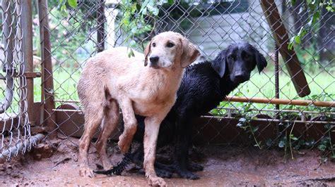 small rescue atlanta rescue puppies atlanta humane society