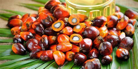 Minyak Kelapa Sawit Per Kg harga cpo di jambi rp7 748 per kilogram