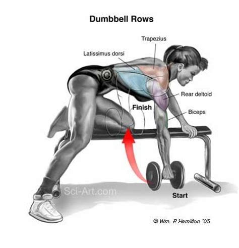 high bench two dumbbell rowing muscle specific training 5 getting yoked traps flat
