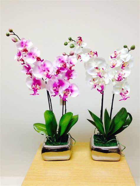 Best House Plant by Plantas De Interior Con Flor Para Decorar
