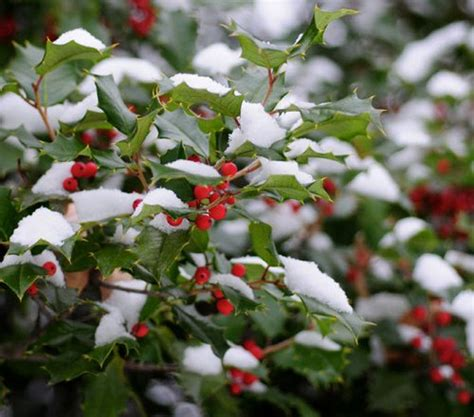 Winter Flowers For The Garden Garden Plants Winter Pdf