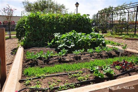 my oklahoma fall vegetable garden dirt ramblings 174 - Fall Gardening In Oklahoma