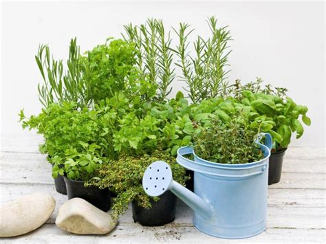 herbs indoors how to grow herbs indoors and outdoors food network