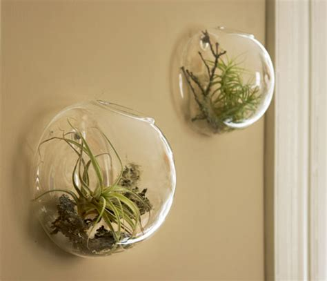 Rustic Wall Decor by Picture Of Wall Bubble Florarium