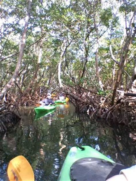 party boat fishing siesta key fl sea life kayak adventures sarasota kayak tours and rentals