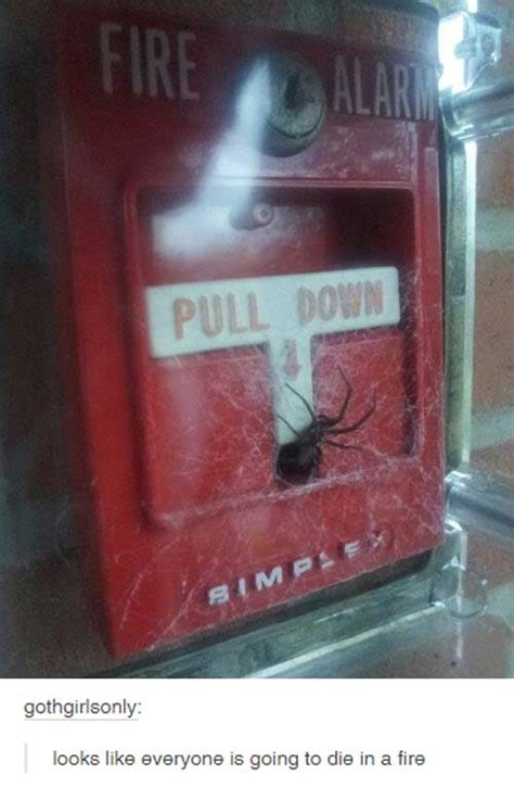 Spider Fire Alarm Meme - nope not gonna happen 15 pics