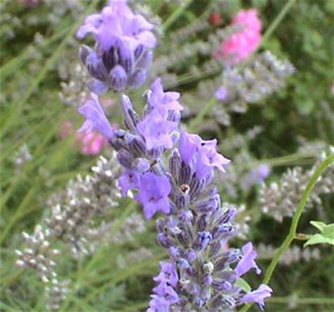 dei fiori fiction metal alchemist il linguaggio dei fiori di
