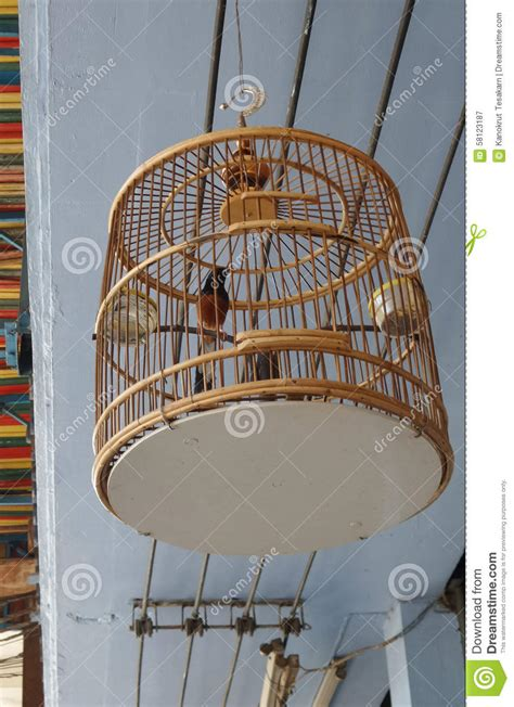Hanging Bird Cages From Ceiling by Whiskered Bulbul Bird In Unique Classic Cage Stock