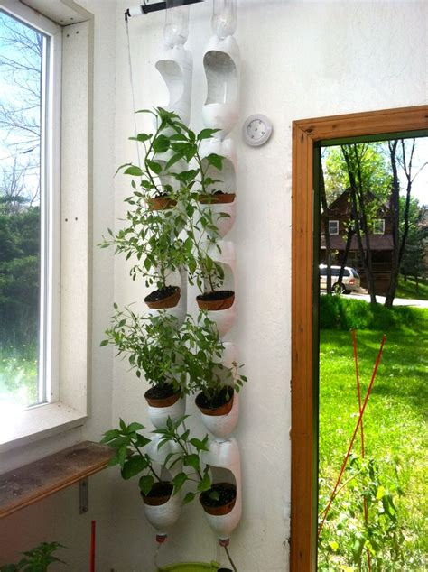 How To Make A Vertical Garden Out Of A Pallet Plenty Of Basil Growing In Vertical Garden Made Out Of