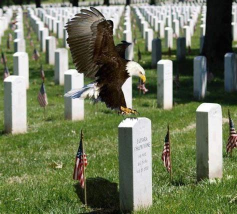 ani s american eagle i walk into the room in gold lookbook arlington cemetery counting the cost americana the o jays