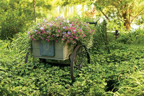 backyard cottages florida surfinia 174 sky blue petunia hybrid proven winners