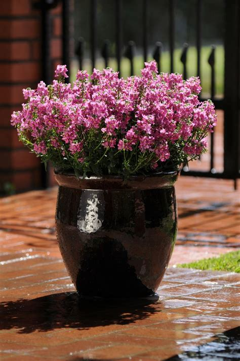 container gardening ideas  plants  containers