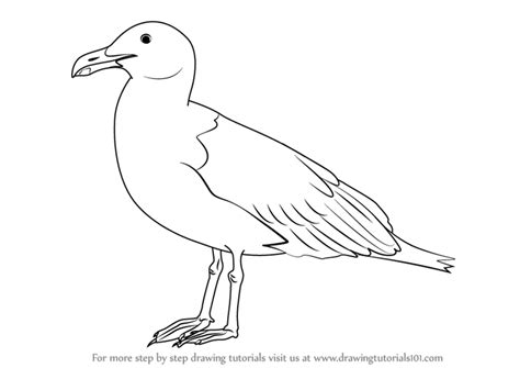 how to draw sea birds learn how to draw a seagull birds step by step drawing