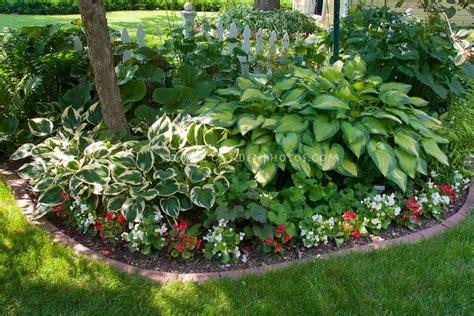 hosta flower beds hosta shade garden heaven on earth pinterest