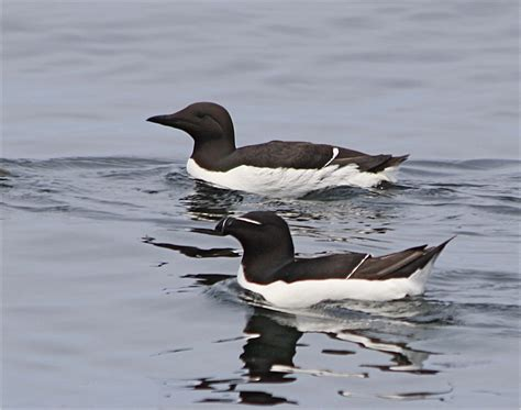 boat tours from southwest harbor maine boat tours from vinalhaven home