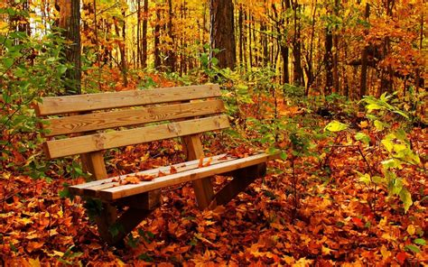 bench in forest autumn pictures for desktop backgrounds wallpaper cave