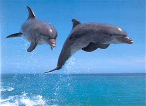 imagenes animales que respiran por los pulmones material para ti los animales y el medio ambiente