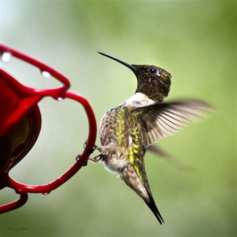 how to keep ants off hummingbird feeders www