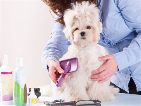 how often should you wash a puppy how often should you groom your napa s daily growl