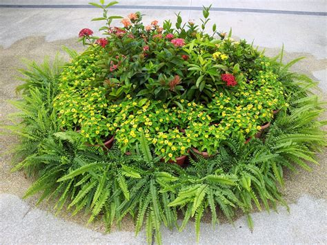 Circle Garden by A Circle Shape Garden Free Stock Photo Domain