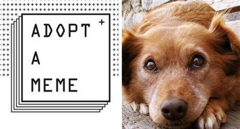 Adoption Meme - creative adoption caign adopt a meme is using real