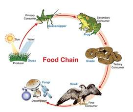 Ford Chaign Food Webs