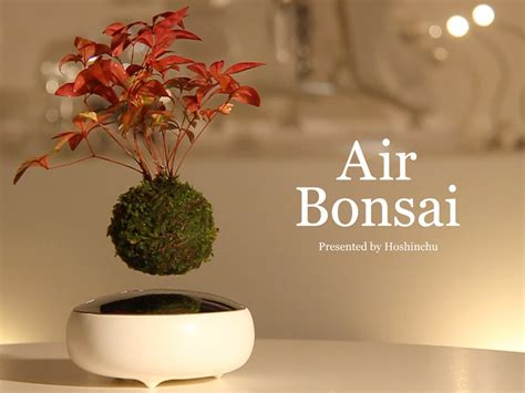 Home Decor Application air bonsai floating plant magnepiphyte technabob