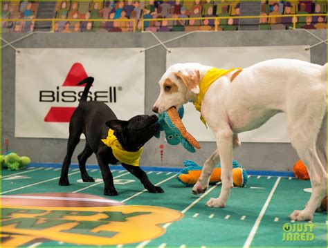 who won the puppy bowl 2017 puppy bowl 2017 meet the dogs the more photo 3853447 2017