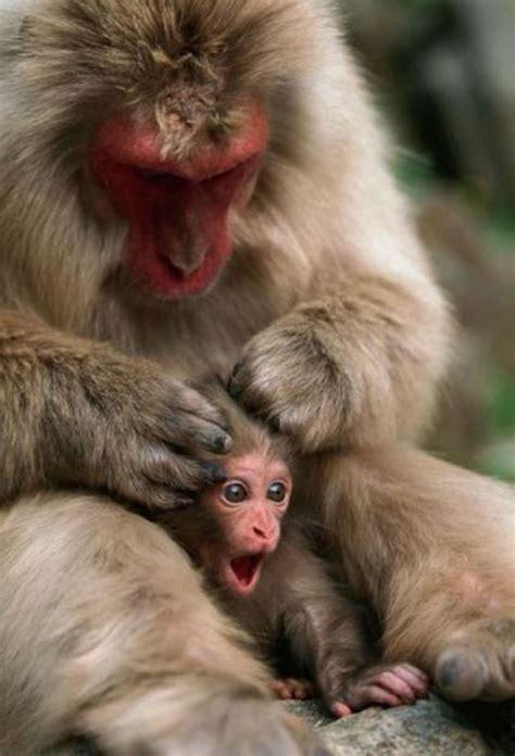 monkey and baby monkey daily picks and flicks